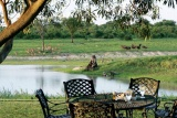 Bustling waterhole at arathusa safari lodge