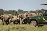 Kichwa tembo game drive,  Maasai Mara