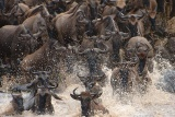 Great Migration at Kichwa Tembo