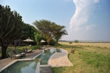 Kichwa tembo pool,  Maasai Mara