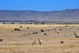 Borana lodge plains, Laikipia, Kenya