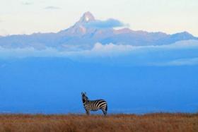 Kicheche-laikipia-zebra-mt-kenya-800px
