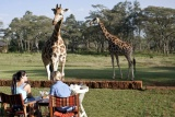 Giraffe manor feeding outside