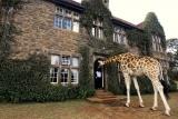 Giraffe manor tall visitor