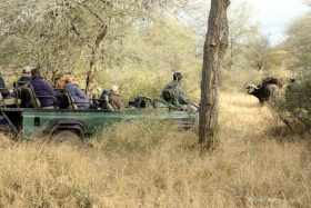 Game drive in timbavati