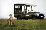 Cheetah on game drive at Mara Plains Camp