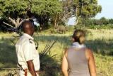 Elepants on bush walk, camp okavango
