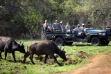 Game drive at Phinda Private Reserve, KwaZulu-Natal