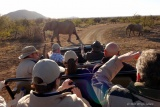 Elephants crossing on game drive at Tuninig