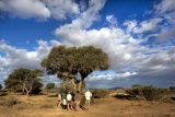 Guided bush walk kulala desert lodge dm