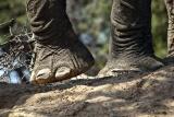 Damaraland elephant feet oe