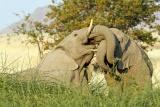 Desert rhino camp ellies cc
