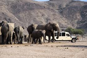 Desert Elephants on Game Drive, Hoanib Skeleton Coast Camp