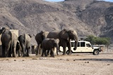 Elephants on Game Drive, Hoanib Skeleton Coast Camp