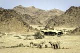 Hoanib elephant herd da