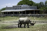 Anderssons camp black rhino da