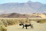 Doranawas black rhino da