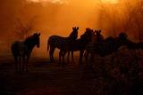 Leroo La Tau animals at dusk