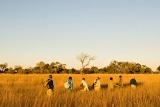 Xugana Island Lodge walking safari