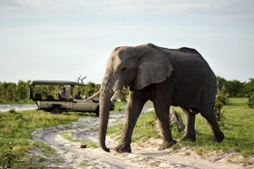 Savute elephant camp game drive
