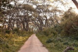 Lake Manyara Tree Lodge, forest driveway