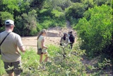 Bush walk to dry river bed, bateleur camp