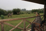 View from the balcony at Rhino Lodge