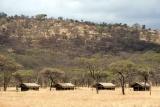 Serengeti kati kati surrounds