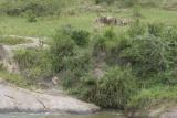 Serengeti Migration Camp, hippo pool