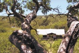 Serengeti Migration Camp, view over bedroom