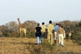 Guided bush walks, elephant plains