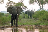 Imbali Safari Lodge elephants at waterhole
