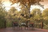 Hoyo Hoyo Tsonga Lodge patio with elephants in background