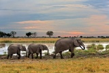 Kwando lagoon elephants