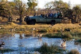 Kwando Kwara Wild Dogs Close to Vehicle