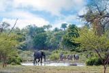 Elephants at kings camp waterhole