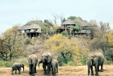 Leopard hills elephant visitors