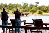 Gomo Gomo elephant view