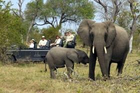 Dulini game drive elephants