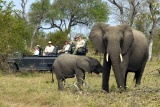 Elephant mum & baby on Dulini game drive