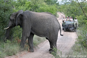 Exeter River Lodge game drive and elephant