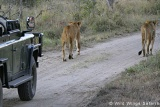 Open vehicle game drive, Nkorho