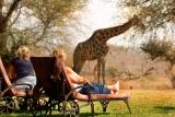Mohlabetsi giraffe in camp