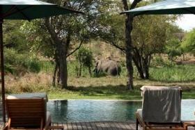 Elephant visitors at Tanda Tula