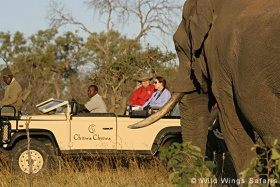 Game drive and elephant