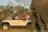 Chitwa game drive and elephant