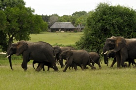 Elephants in front of Inyati Lodge