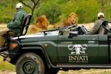 Game drive lions at Inyati