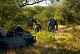 Game Drive at River Lodge