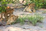 nThambo Wild